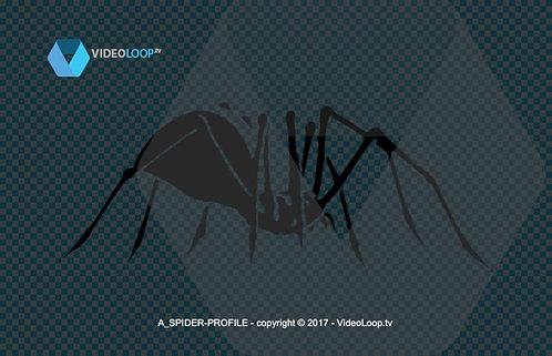 videoloop.tv   A spider walks