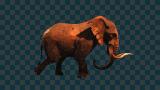 A_ELEPHANT-WALK.png