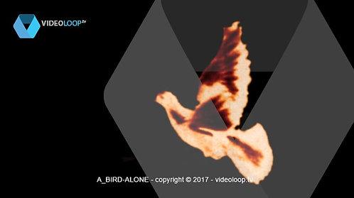 VideoLoop.tv | A bird flight alone
