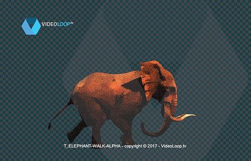 Videoloop.tv | Nature |  Animal | Tiled Elephant