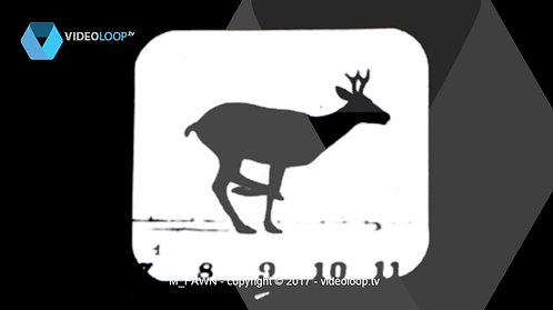 VideoLoop.tv | A running fawn with numbers