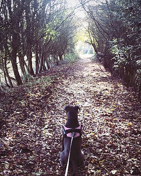 Following the trail of leaves 🐾 #wilson