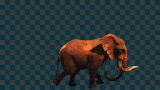 T_ELEPHANT-WALK.png