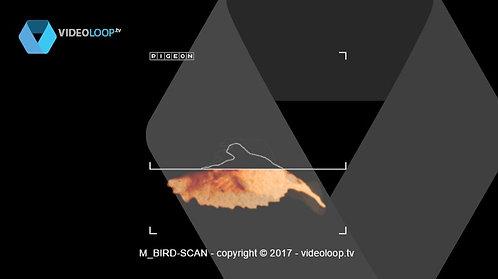 VideoLoop.tv | A bird is scanned