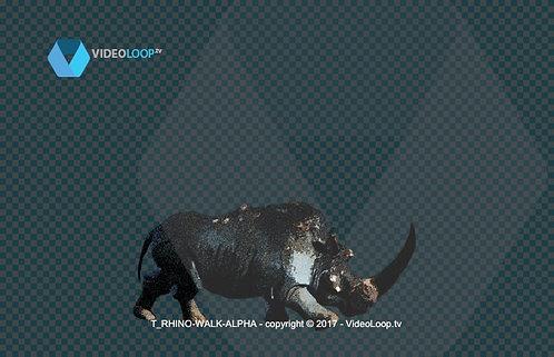 Videoloop.tv | Nature |  Animal | Tiled Rhinoceros
