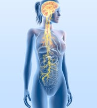 The Importance of The Vagus Nerve