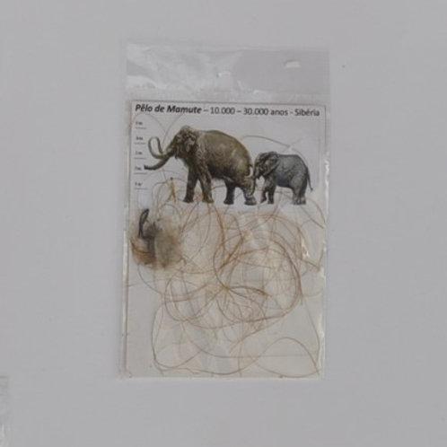 pêlo de mamute