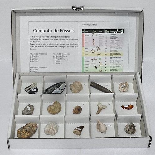Conjunto de fósseis