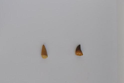 dente de mosassauros