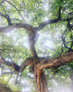 Trees I admired today 🌳❤️.jpg