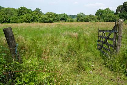 Rhos Pasture, East Shallowford.jpg