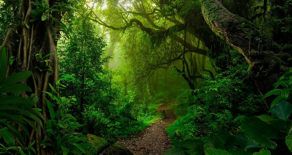 Le bain de forêt ou shinrin yoku