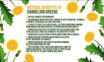 Natural benefits of DANDELION greens