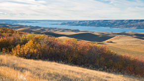 SaskWatch Research Plays a Part in COVID-19 Research in Saskatchewan