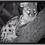 Thumbnail: Monocular de visión nocturna Bushnell Equinox Z2