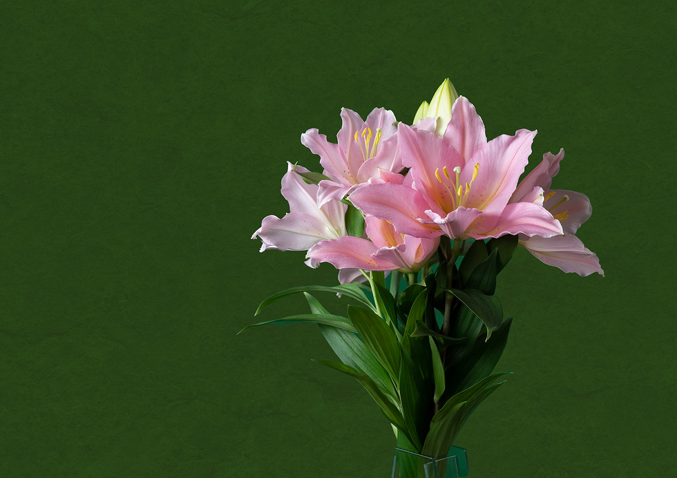 'Lily' by Patricia Mackay ( 13 marks )