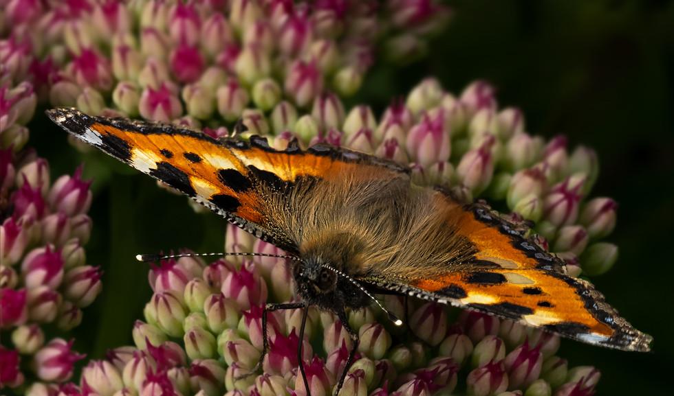 'Butterfly Feeding' by Liz Tullett ( 10 marks )