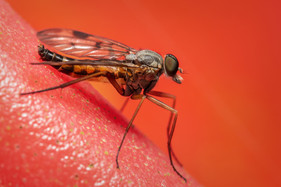 COLOUR: 'Snipefly' by Ted McKee - Ards Camera Club