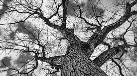 sky tree 2018