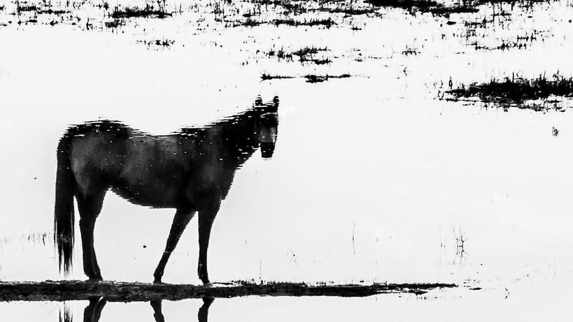 Aquus  2019