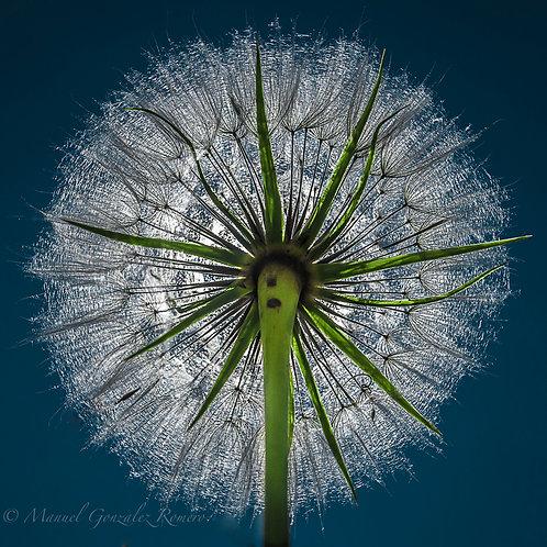 The Sun Flower 2018