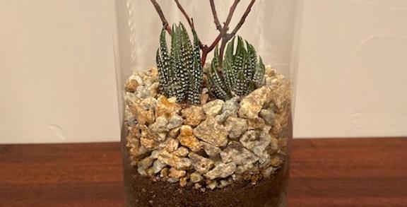 Zen Garden Glass Cylinder Vase