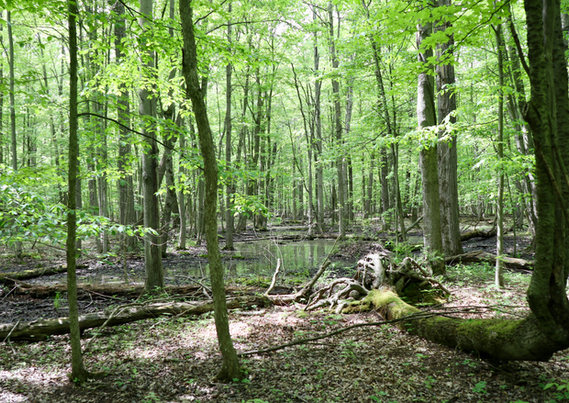 Margery Gallogly Nature Santuary