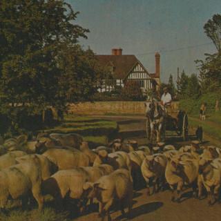 Elmley Road (3).JPG
