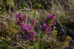 Toumbaal Flora (1)