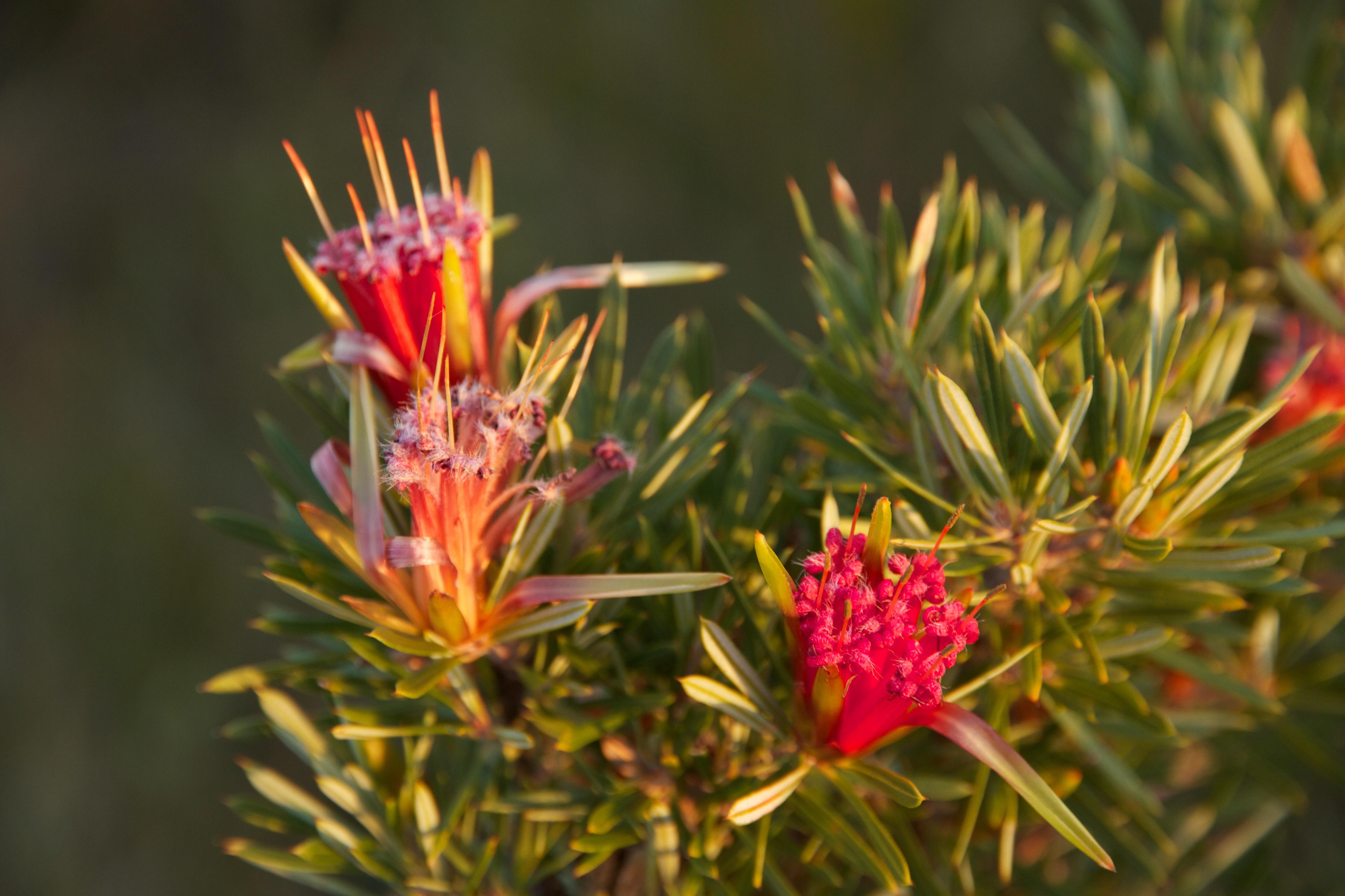 Toumbaal Flora 1