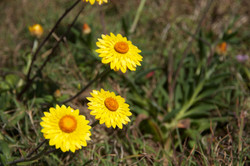 Toumbaal Flora 1 (1)