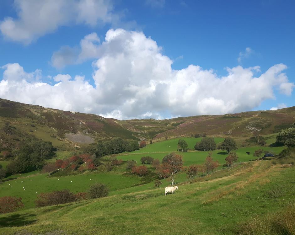 Cwmerfyn, Cambrian Mountains