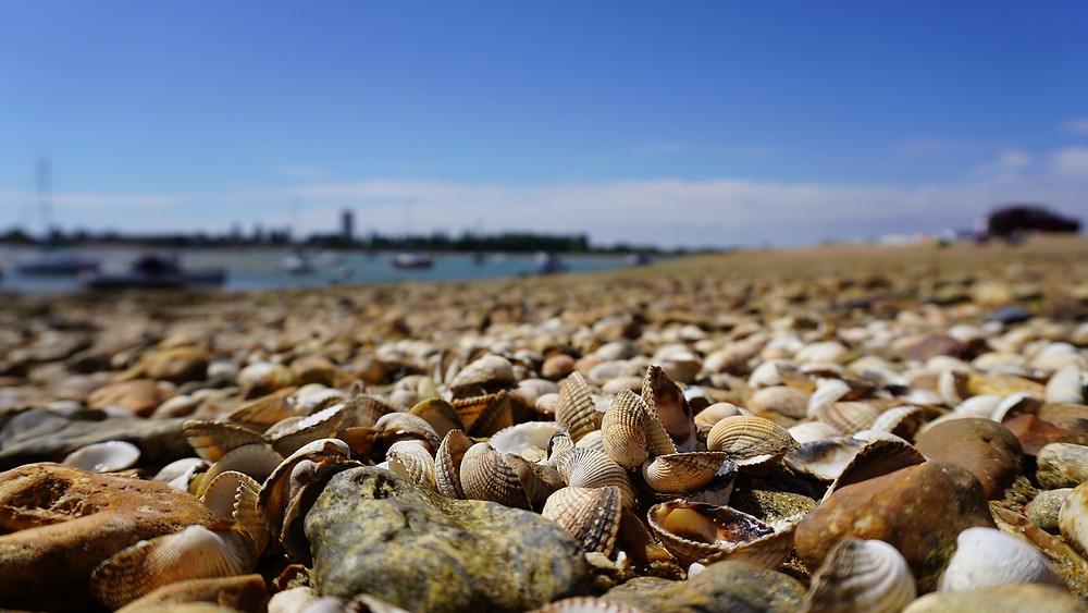 Beach shells, expressive photography, nature and beach landscapes