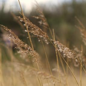 Dreamy Reeds