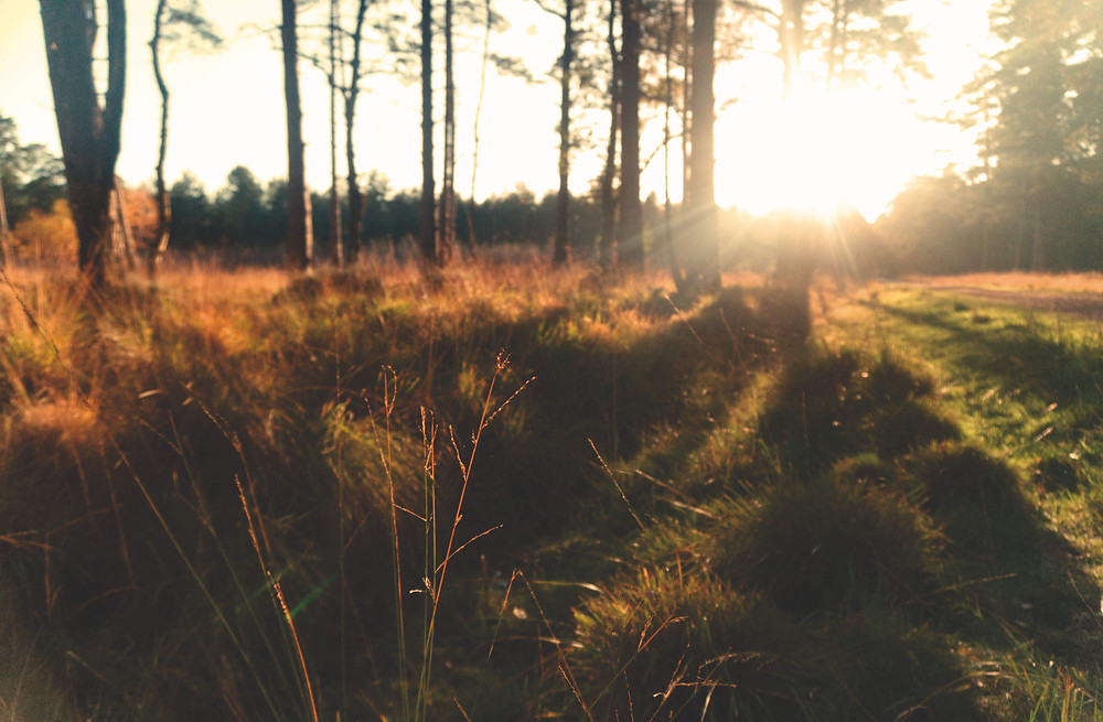 Sunset in nature, New Forest National Park, UK