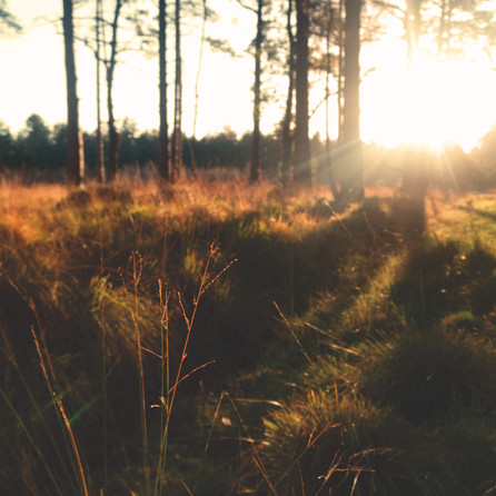 New Forest National Park, UK