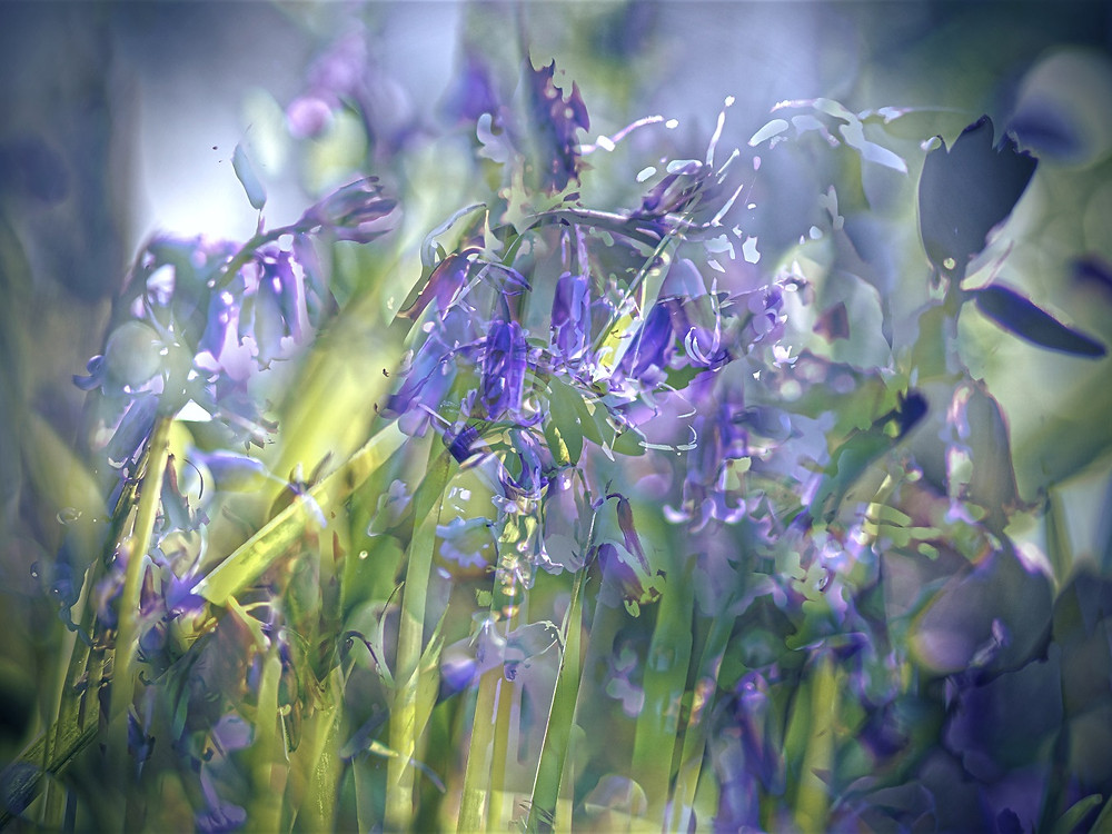 Ethereal, abstract bluebell art.