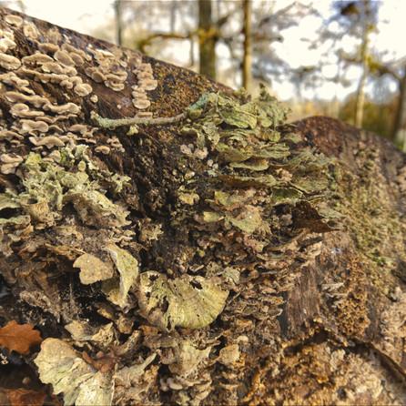 Funghi, Forest of Bere, Fareham, UK