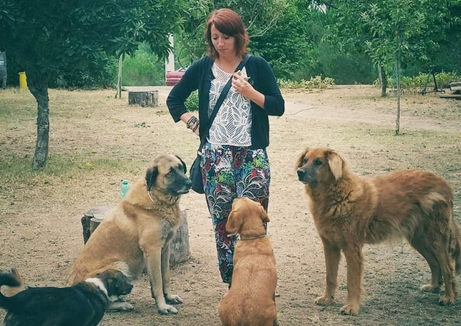 Portugal and the farm dogs