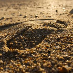 Golden Footprints