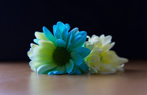 Flower Duo small.jpg