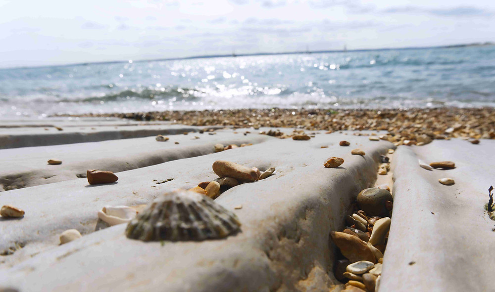 Peaceful and relaxing beach moments. Close up sea shells and sea