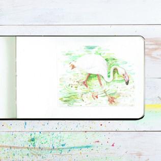Flamingo Sketchbook video.mp4