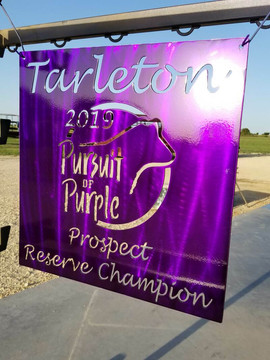 Tarleton Pursuit of Purple.jpg