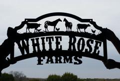 White rose farms.jpg