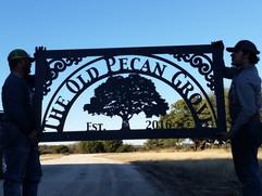 The old pecan grove.jpg