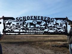 Schoeneberg herefords.jpg