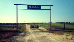 CF cattle comapny.jpg