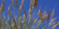 MBSR_Méditation_Gironde_Bordeaux_3.jpg