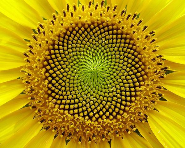 yellowgreencloseup.jpg